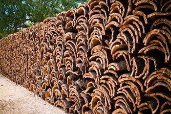 Свойства коры пробкового дуба