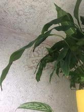 Укладка клеевой пробки для потолка и стен Corksribas на балконе - фото 4